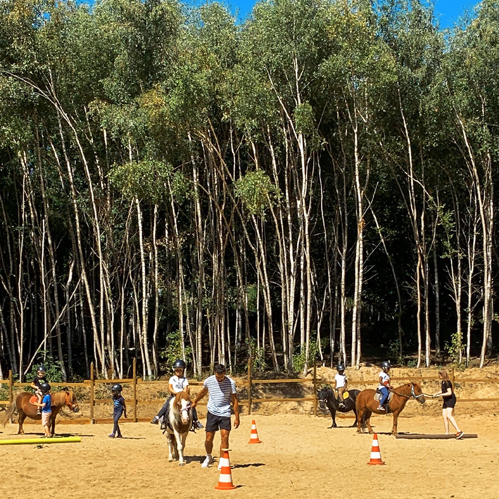 poneys_bois_2_colo