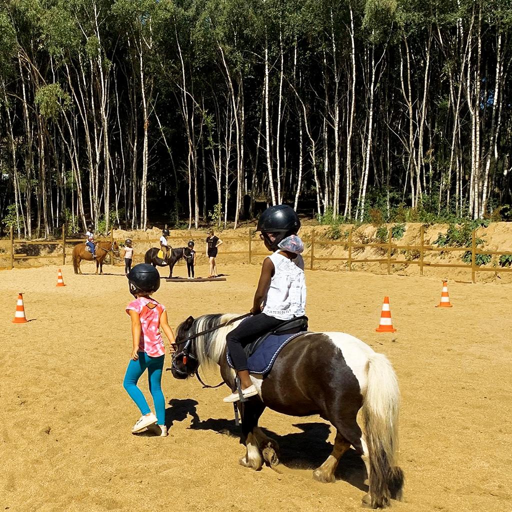 poneys_bois_colo